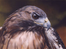 """Red Alert - Red Tailed Hawk"" Carl Brenders Limited Edition Print"