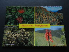 TASMANIAN WILDFLOWERS WARATAH RICHEA SCOTARIA ROCKET BLANDFORDIA POSTCARD