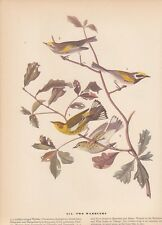 "1942 Vintage AUDUBON BIRDS #414 ""TWO WARBLERS"" LOVELY Color Art Plate Lithograph"