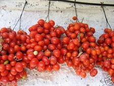 30 Seeds Red Principle Cherry Tomato Fruit Vegetable Seed Organic Seeds