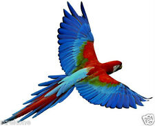 """GREEN WINGED MACAW"" Amazon Parrot Exotic Bird In Flight - WindowCling Sticker"