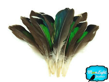 10 Pieces - Iridescent Green Mallard Duck Wing Feathers