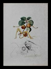 "Salvador Dali ""Abricot Chevalier"" Lithograph with engraving FlorDali/ Les Fruits"