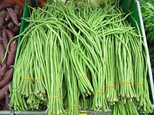 Stonysoil Seed Company Asian Heirloom Yard Long Bean Seeds Red Seeded Variety Sw