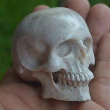 Skull Carving in Moose Antler Hand Carved 49mm Height S317