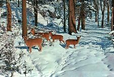 Michigan Whitetail Deer Herd in Beautiful Winter Snow MI Woods - Animal Postcard