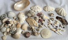 Seashells Clam Conch Sand Dollar Conus Much More Sea Shell Lot