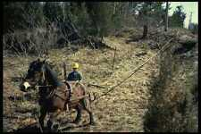 741017 Horse Pulling Cable Through Bush A4 Photo Print