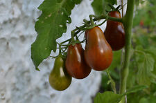 Chocolate Pear Tomato 5+ seeds