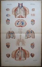 Lithographie, Angeiologie poumons et coeur, Bourgery et Jacob, v. 1840