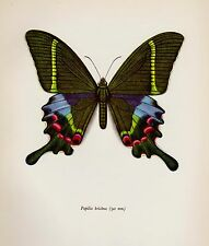 Vintage BUTTERFLY Print Beautiful Butterfly Wall Art PEACOCK SWALLOWTAIL 935
