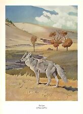 "1957 Vintage FRANCIS LEE JAQUES ""COYOTE"" FABULOUS Color Art HUNTING Lithograph"