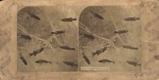 STEREOVIEW OF JACK FROSTS AQUARIUM