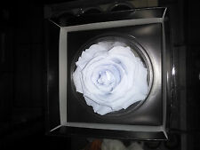 1 Premium Large Preserved Forever Light Blue Rose in Gift Box Powder Blue