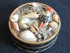 ancienne petite boite en carton corail et coquillages souvenir de bord de mer.