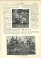 1896 Robert Chambers Short Story The Pickets Mary Had A Little Lamb