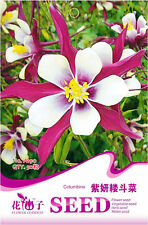 1 Pack 50 Purple Columbine Seeds Aquilegia Vulgaris Garden Flowers A190