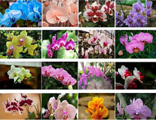 Pack of  100 Seeds 24 Types Perennial Phalaenopsis Orchid Flower Rare Butterfly