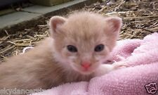 HELP RESCUED KITTEN FERAL CAT RESCUE FOOD VET DONATION Rec email COLOR PHOTO