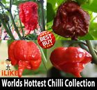 Worlds Top 4 Hottest Chilli Pepper Collection 40 Seeds Minimum. 100% Pure. Hot.