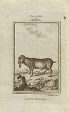 "1785 copper engraving  -  buffons natural history. "" african  he - goat """