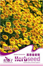 1 Pack 50 Golden Chamomile Seeds Chamaemelum Nobile Fruity Chamomile Herb D017