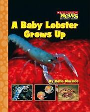 A Baby Lobster Grows Up (Scholastic News Nonfiction Readers: Life Cycles (Paper
