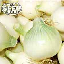 Crystal Wax Onion Seeds - 350 SEEDS NON-GMO