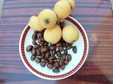 20 Loquat Fruit Tree Seeds Japanese Plum, Grown in California USA