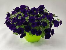 "Trailing Petunia Seeds Success Blue 25 Pelleted Seeds ""NEW"" true color"