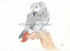 African Grey Parrot Art Print A4 size Giclee Print from Pastel, Birthday Gift