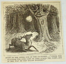 small 1881 magazine engraving ~ HUNTER IN TREE SHOOTS AND KILLS DEER ~ Vancouver