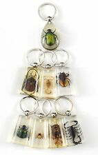 7 pieces Real Insect Keychain,assorted bugs in clear acrylic