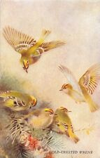 BIRDS IN FLIGHT PYCRAFT & GREEN POSTCARD 1910s CHAFFINCH