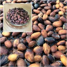 Raw Cacao/Cocoa Beans, Raw Chocolate, Organic Farming From Thailand 500 grams