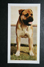 Bull Mastiff      Vintage Photo Card  #  Excellent Condition
