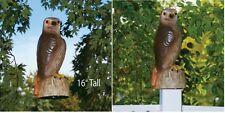 Red Tail Hawk, Lifelike Features And Realistic Stare, Scare Birds, Squirrel Away