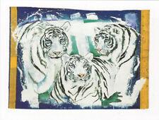 Rolf Knie - Three White Tigers Poster Kunstdruck Kunstdrucke Bild  60 x 80 cm