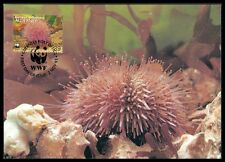 ALDERNEY MK FAUNA SEEIGEL SEA URCHIN MAXIMUMKARTE CARTE MAXIMUM CARD MC CM ba72