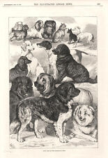Prize Dogs at the Birmingham Show   -   Original Print    -   1870