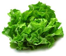 Lettuce Seed 400 Seeds Romaine Lettuce Bulk Seeds Organic Vegetables