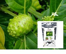 Morinda Citrifolia Powder Tahitian noni Indian  beach mulberry 500g / 17.62 OZ