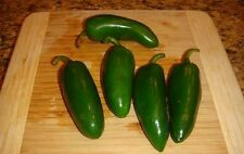 JUMBO JALAPENO PEPPER 20 SEEDS