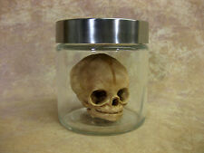 Alien Fetal Skull in Glass Jar, Halloween Prop, Human Skulls/Skeleton, NEW