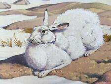 Neave Parker 1910-1961 Original Watercolour Artwork Illustration Greenland Hare