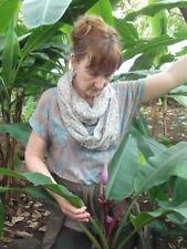 Rosa Banane / winterharte Pflanzen mit geringem Lichtbedarf für schattige Plätze