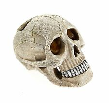 Small Human Skull Fish Cave Aquarium Ornament Fish Tank Decoration