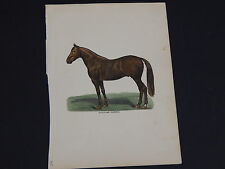 Horses, Horse prints, Hand color, c.1890's #23 Stallion Harold
