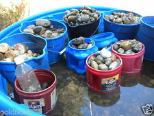 START A PET ROCK FACTORY! WE SUPPLY THE ROCKS AND EYES! SELL AT FAIRS OR ONLINE!