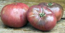 50 Cherokee Purple Tomato Seeds Rare Beautiful Heirloom black DELICIOUS Prolific